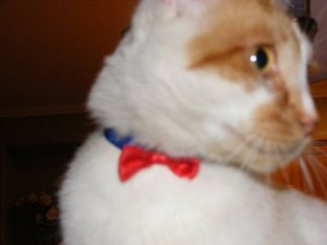 a true gentleman, and yes thats a bowtie.
