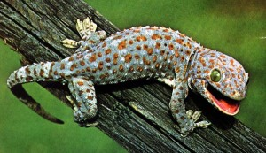 "i didnt want to image search ""girls making out"" so here's a gecko. enjoy."