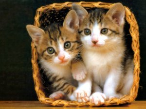"i refuse to google ""tentacle rape"" so here are some kittens."
