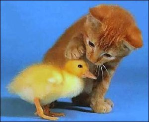 I'm not looking up 2 girls 1 cup, so here's a kitten petting a duckling